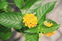 枝头上的黄色小花