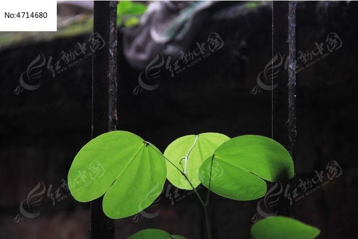 原创摄影图 动物植物 树木枝叶 几片叶子