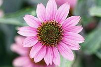 植物园中漂亮的小菊花