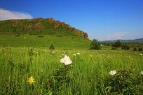 鲜花盛开的草原