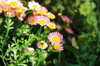 阳光下的小花