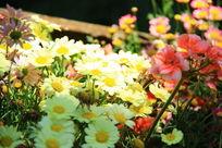 一片五颜六色花