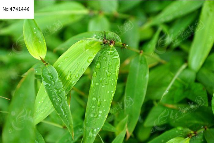 原创摄影图 动物植物 树木枝叶 碧绿的竹叶高清拍摄