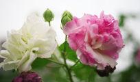 非常漂亮的花