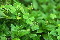 绿色枝叶背景