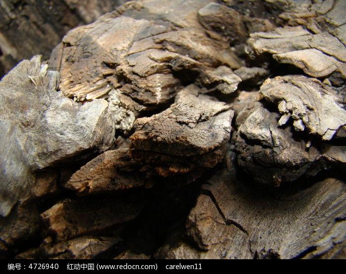 明暗不同的朽木图片,高清大图_树木枝叶素材