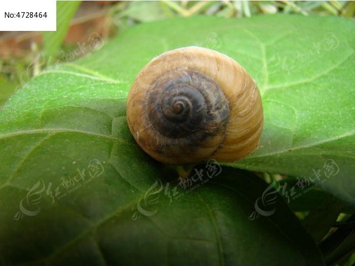 原创摄影图 动物植物 花卉花草 叶子上的蜗牛
