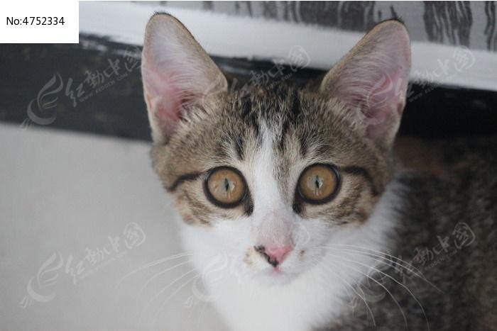可爱条纹猫咪头部特写