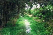 西山小草繁茂的沼泽