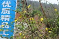 野草花朵在肆意的开放