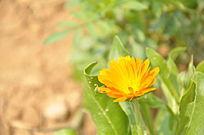 一朵稀疏的黄色花卉