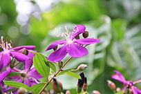 枝头上的紫色花簇