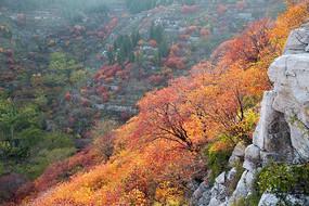 山坡上的红叶红彤彤