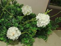 室内植物摄影