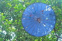 树上挂着的蓝色油纸伞