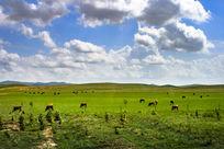 草原牧马曲