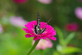 花蝴蝶飞在鲜艳的花朵上