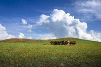 蓝天下的草原马群