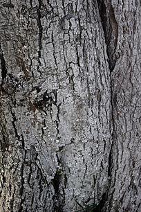老树皮肌理