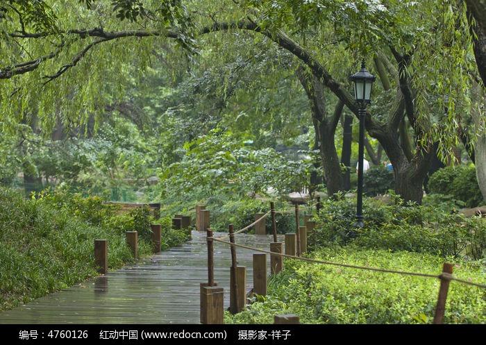 柳树图片,高清大图_园林景观素材