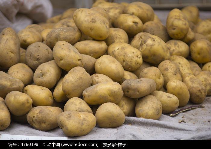 秦皇岛昌黎土豆价格