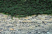 城墙上的绿色爬山虎背景素材