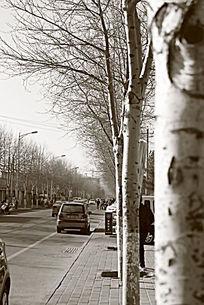城市路边树木景色