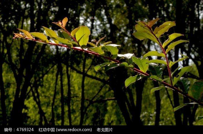 光影中的树叶图片,高清大图_树木枝叶素材