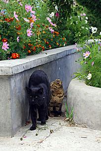 黑猫与花猫