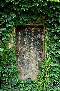 绿色滕曼植物围绕的古迹石碑碑刻背景素材