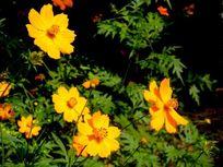 一簇黄色向阳花
