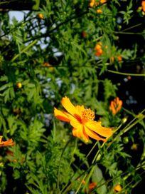 一朵黄色向阳花