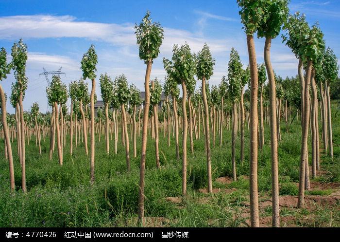 幼树成长图片,高清大图_树木枝叶素材