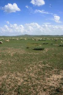 高原上羊儿们