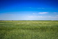 广袤的草原
