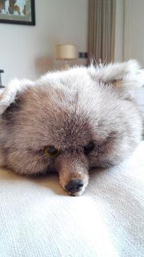 狐狸皮软装