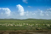 蓝天下的羊群