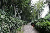 竹林灌木与小道