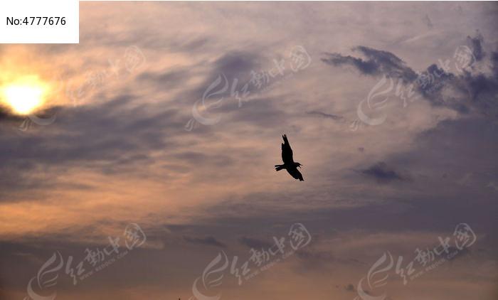 动物 素材 黄昏/动物鸟 植物 草坪 湿地 天空云彩湖水飞翔黄昏太阳