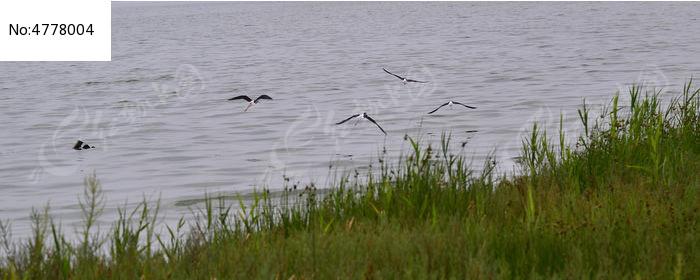 湖水边的绿坪图片,高清大图_空中动物素材