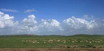 快乐的羊群