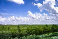 茫茫大草原