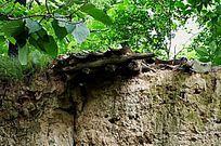 泥墙上残留的屋檐特写