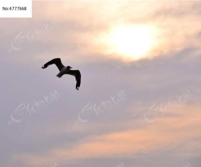 动物 素材 天空/动物鸟 植物 草坪 湿地 天空云彩湖水飞翔黄昏太阳
