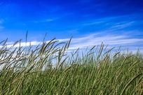 微风轻拂草原草