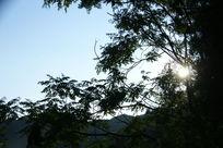 阳光下的树木枝叶阴影摄影