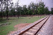 野生动物园内小火车铁轨