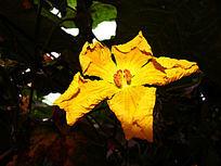 一朵清晰的庄稼花
