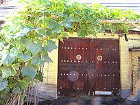 长在大门上的绿藤