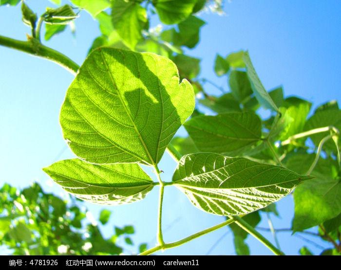 原创摄影图 动物植物 花卉花草 空中嫩绿的叶子  请您分享: 红动网
